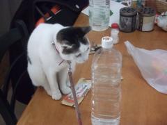 ペットボトルと猫