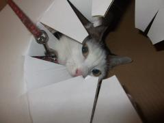 箱の中のはな
