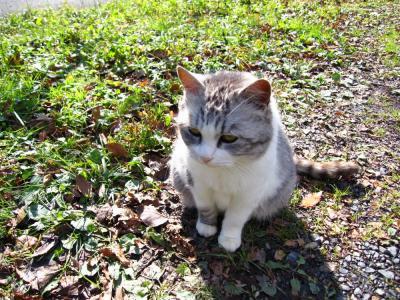 菩提寺の猫