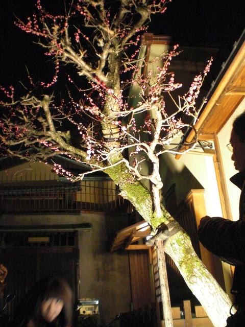 梅のライトアップ2