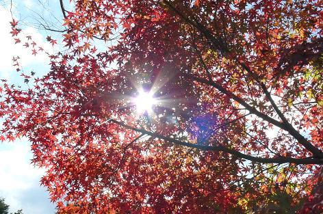 楓と木漏れ日♪
