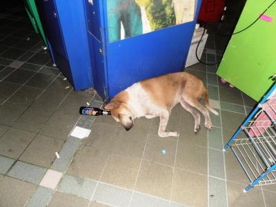 2011年8月タイ-スリランカ旅行タイ後半20日RCA(ロイヤル・シティー・アベニュー)の酔っ払い犬