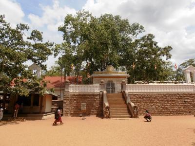 2011年8月タイ-スリランカ旅行スリランカ前半7日スリーマハー菩提樹