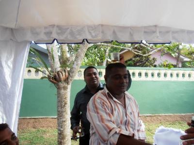 2011年8月タイ-スリランカ旅行スリランカ前半8日サドゥン結婚式グラスを頭上に
