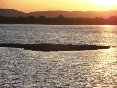 2011年8月タイ-スリランカ旅行スリランカ前半9日ポロンナルワ貯水池の水鳥
