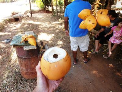 2011年8月タイ-スリランカ旅行スリランカ前半10日シーギリヤ沿道八百屋キングココナッツ