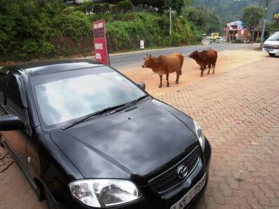 2011年8月タイ-スリランカ旅行スリランカ後半15日ラトゥナプラまでの食堂で牛