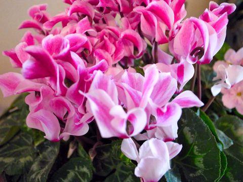 ピンク花2