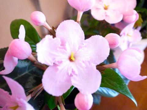 ピンク花1