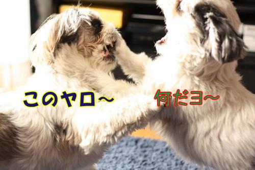 012_20100102001155.jpg
