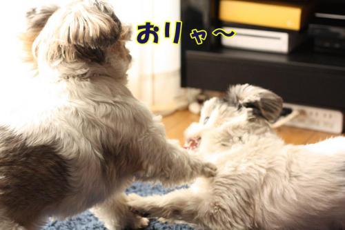 014_20100102001155.jpg