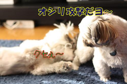 019_20100102001154.jpg