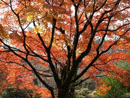 紅葉の丸山公園