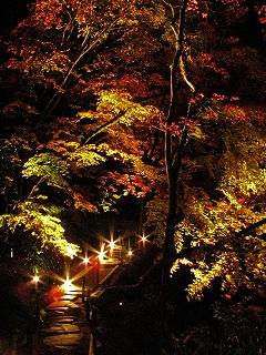 2009.11日光逍遥園紅葉ライトアップ 877