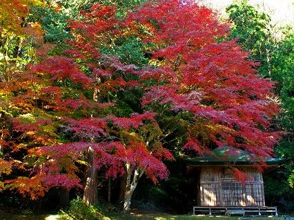 2009.11.雲厳寺 190