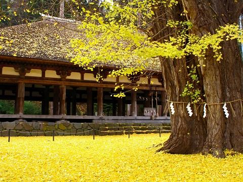 2009.11.喜多方新宮熊野神社イチョウ
