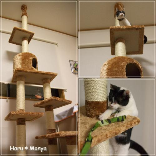 cats_20091212130219.jpg