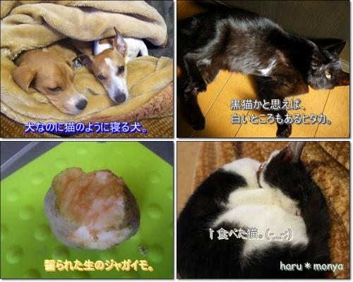 cats_20100105202802.jpg