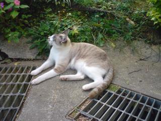 外猫ちゃん★