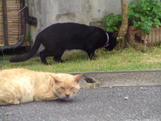 福太郎とクロ