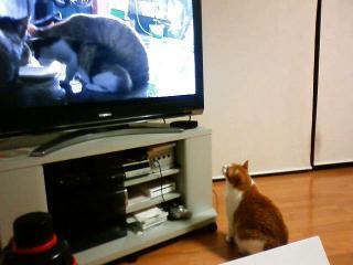 ひな次郎テレビ