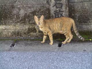 外猫とら吉
