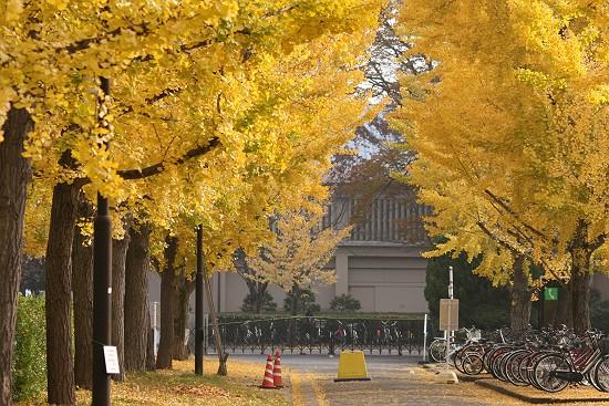 岡山大学 銀杏並木1256-s