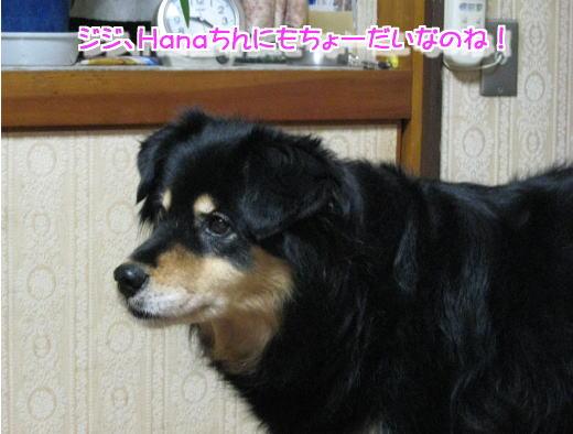 achikochi3.jpg