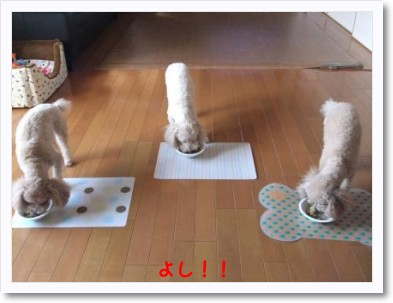 [photo13102728]2011_0107_121722-DSCF2394_convert_20110111110640