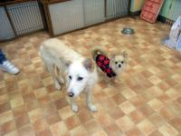 2009-11-17hoikuen2.jpg