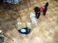 2009-12-1hoikuen5.jpg