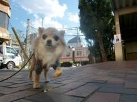 2010-1-5hoikuen4.jpg