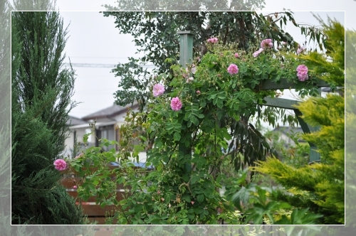 Dsc_0327_20100519164414.jpg