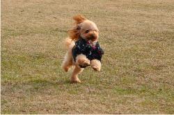 フラちゃん走る