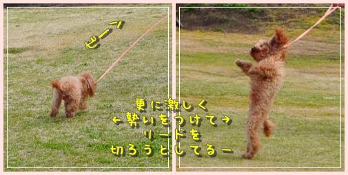 cats_20100411002956.jpg