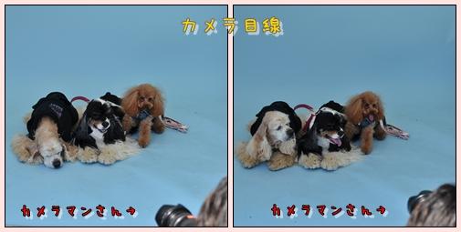 cats_20100427153532.jpg
