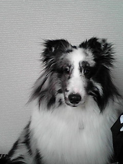 moblog_ea991c00.jpg