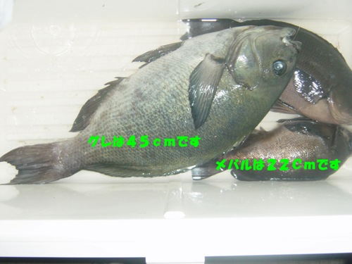 2009_1223_18ban_shimori_mako.jpg
