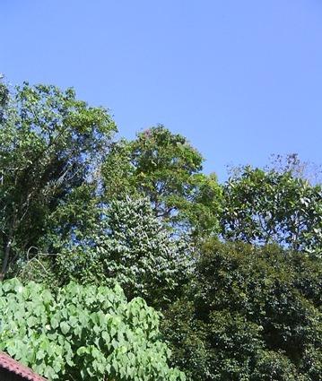 FRIM blue sky