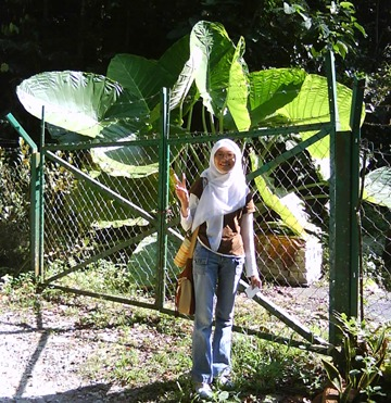 FRIM big leaves