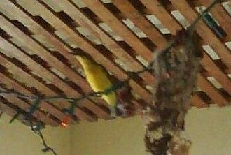 todays bird