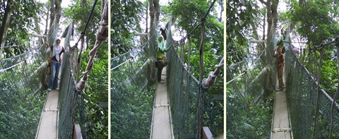 FRIM Canopy Walkway 3nin