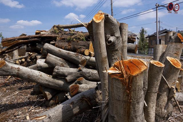 ③麻生、雑木伐採跡