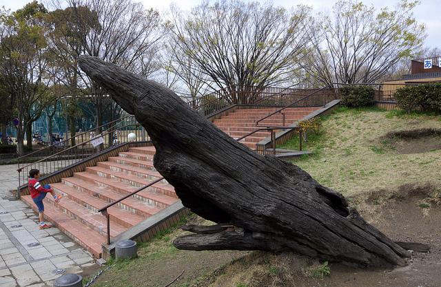 ④鶴川「麻生水処理センター」、埋没樹