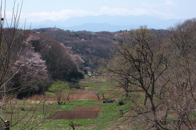 ⑨小野路、春