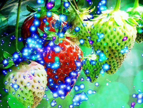 未熟な果実