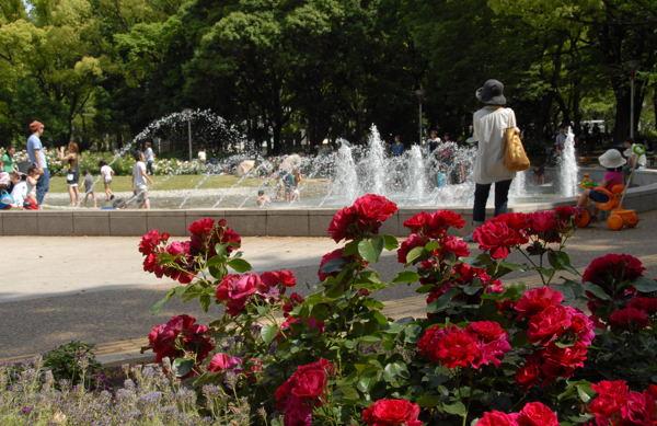 靱公園バラ#08