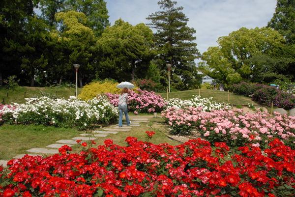靱公園バラ#09