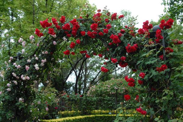 鶴見薔薇#06