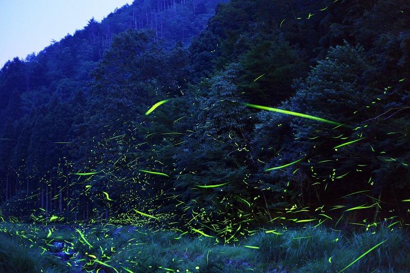 miyamahotaru_001.jpg